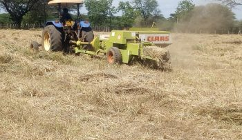 Bailing of pasture grass