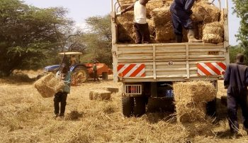 Transportation of baled hay