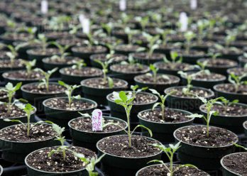 tree_seedlings